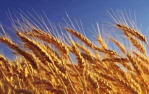 Крупнейший зернотрейдер